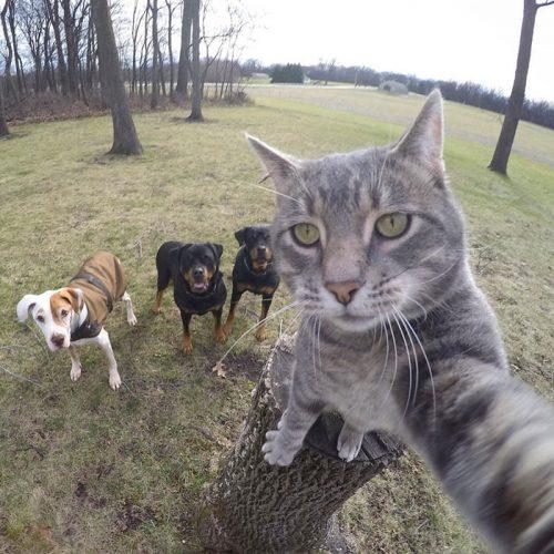 animals about to drop album photos 58aeb7365dc60  700