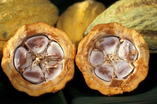 cacao pod 1916418 1280