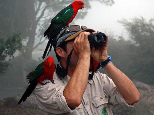 nablyudenie za pticami