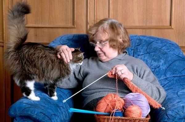 Кошка как домашний доктор, способный предупредить инфаркт и воспаления