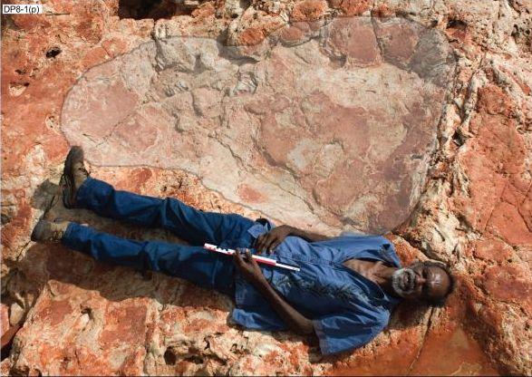 Палеонтологи обнаружили крупнейшие следы динозавров