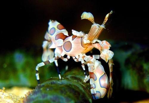15 удивительных созданий из глубин океана