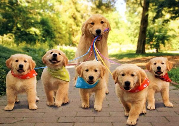 Собаки, которые гордятся своим чудесным потомством
