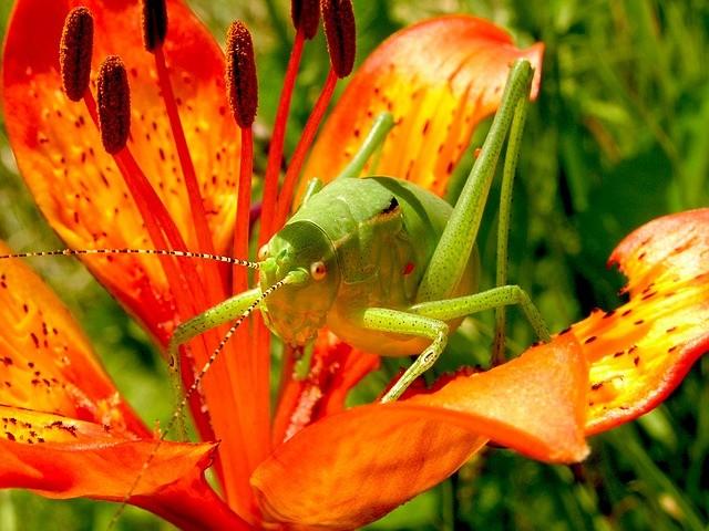 grasshopper 99555 640