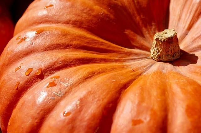 pumpkin 2736964 640