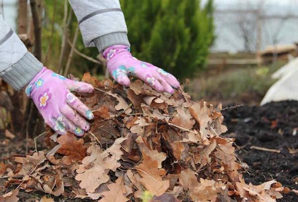 Как поднять плодородие почвы