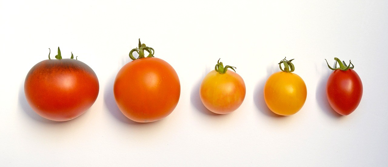 tomatoes 1703968 1280