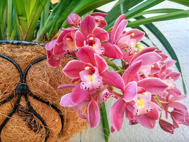 purple orchids 2039270 640