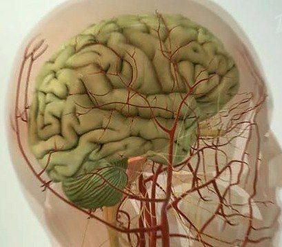 5 методик очищения сосудов головного мозга