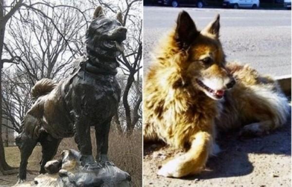 Собаки, которые всю жизнь были преданы людям