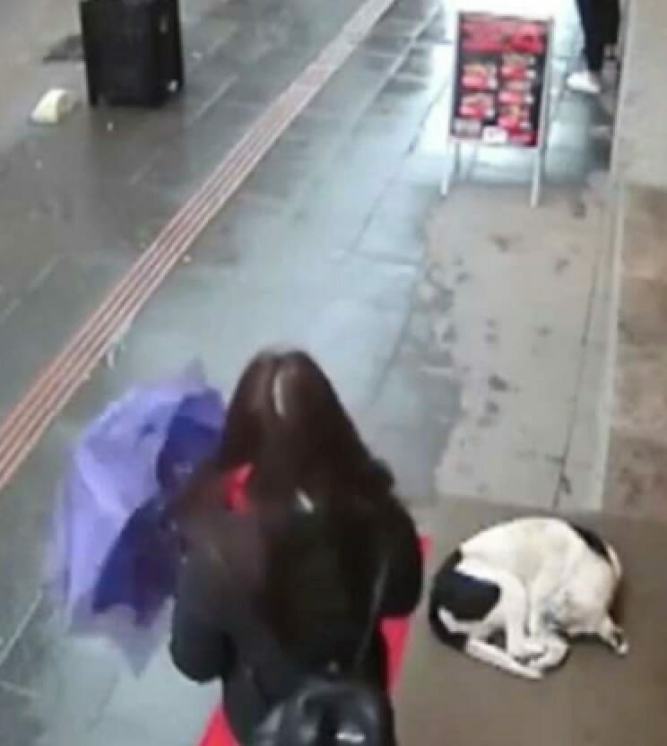 Мокрая, замерзшая бродячая собака пытается согреться, теперь смотрите что делает случайная прохожая…