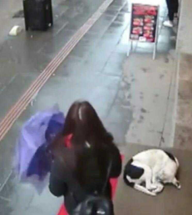 замерзшая бродячая собака пытается согреться теперь смотрите что делает случайная прохожая…