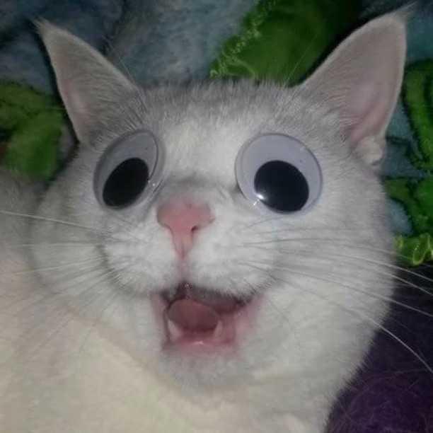 15 фото, доказывающий, что котики