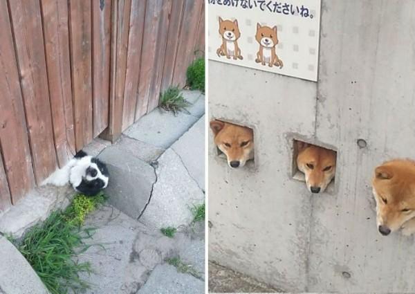 Собаки, которые ну очень хотят сказать «привет»