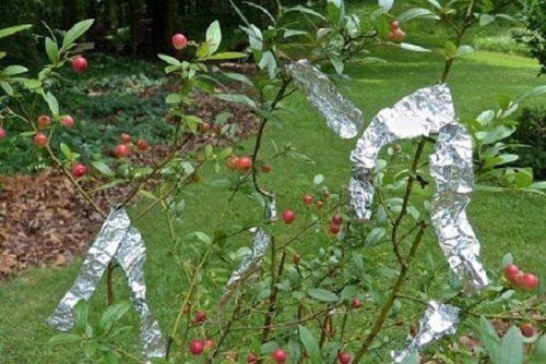 10 genialnyh idej ispolzovanija aljuminievoj folgi