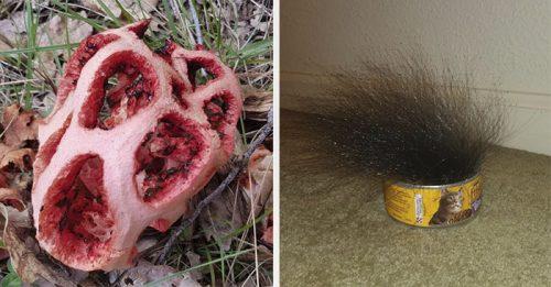 16 fotografij gljadja na kotorye hochetsja skazat prirode chto ty delaesh prekrati