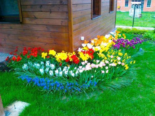 chudesnye cvety dlja lenivogo i krasivogo cvetnika na dache