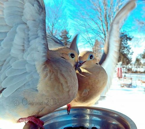 zhenshhina ustanovila foto lovushku u sebja vo dvore i poluchila neverojatnye snimki ptic