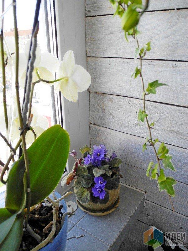 Цветы на зиму переедут обратно в комнату