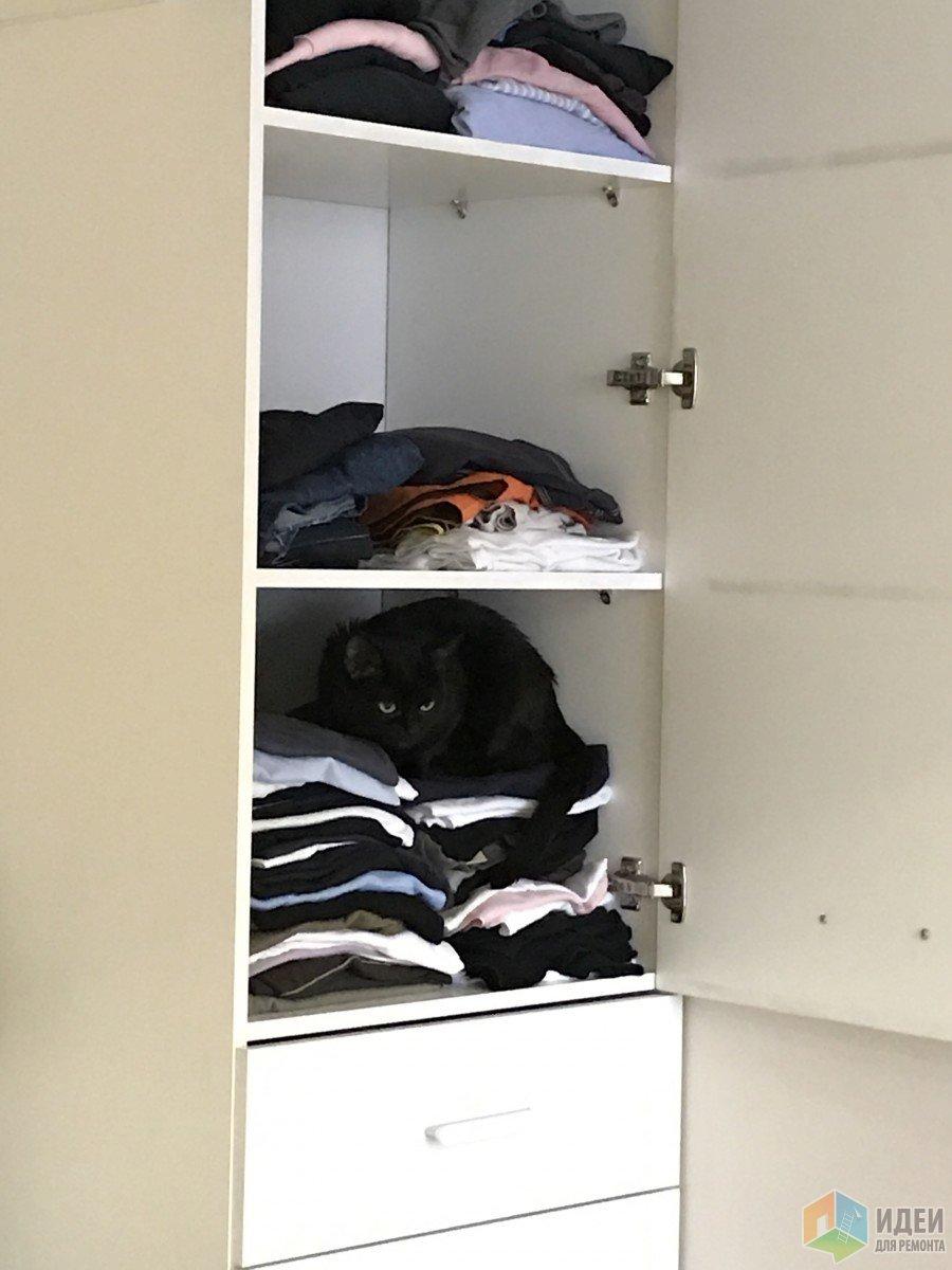 открыв шкаф нашла кота!