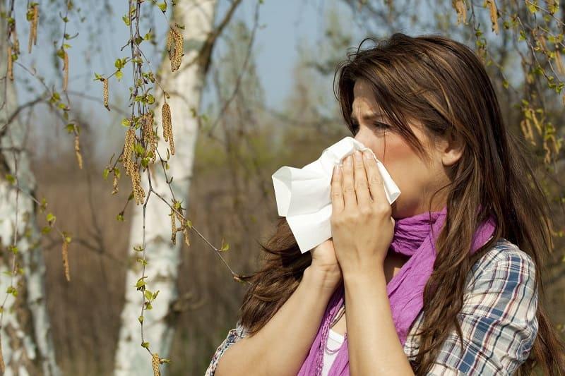 Аллергия на цветение берёзы