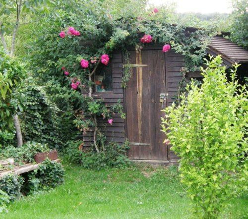 charujushhie i aromatnye rozy na dachnom uchastke vdohnovljajushhie idei