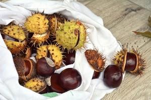 nastojka plodov kashtana profilaktika insulta golovnogo mozga