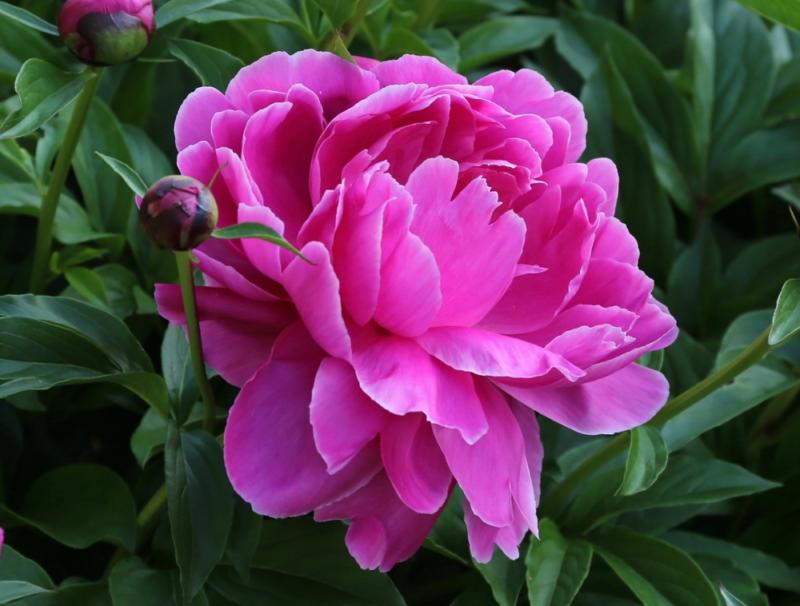 6 poleznyh sovetov kak vyrastit mnogo cvetov