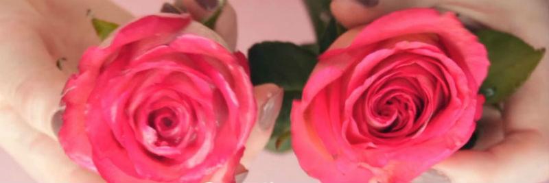 ne vybrasyvajte krasivye rozy prodlevaem zhizn cvetam