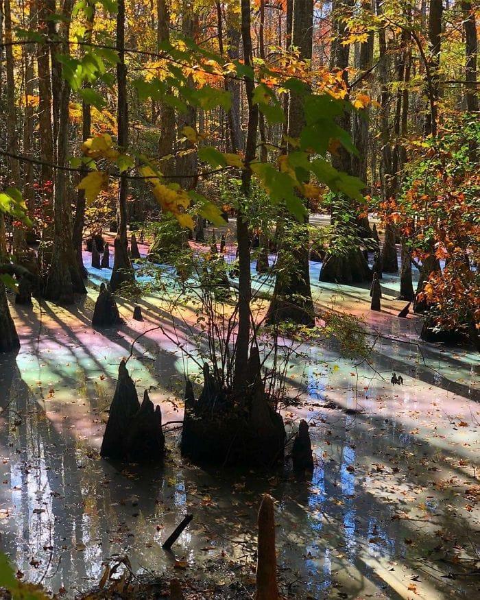 strannye nahodki na kotorye ljudi natykalis v lesu