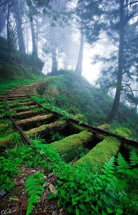 Природа побеждает цивилизацию. Уникальные снимки