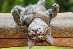 relaksacija dlja polnogo uspokoenija nervov za 15 minut. kak provesti