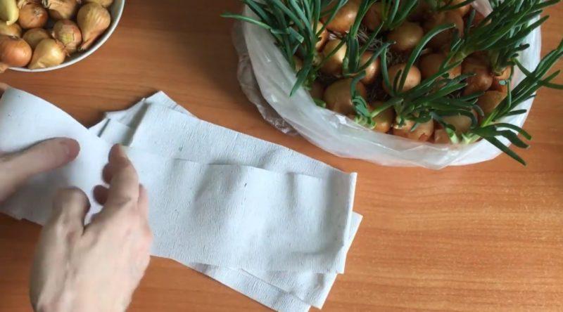 super sposob vyrashhivanija zelenogo luka v pakete bez zemli