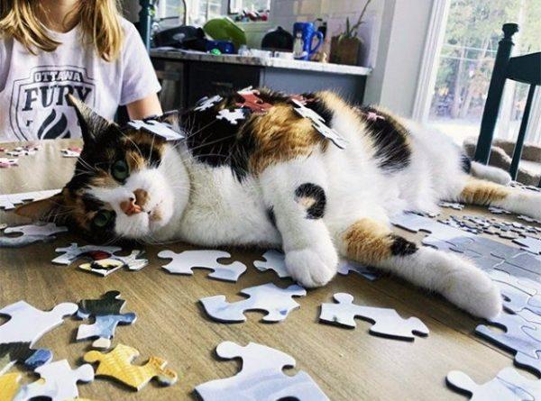 Кошки помогают своим хозяевам собирать пазлы