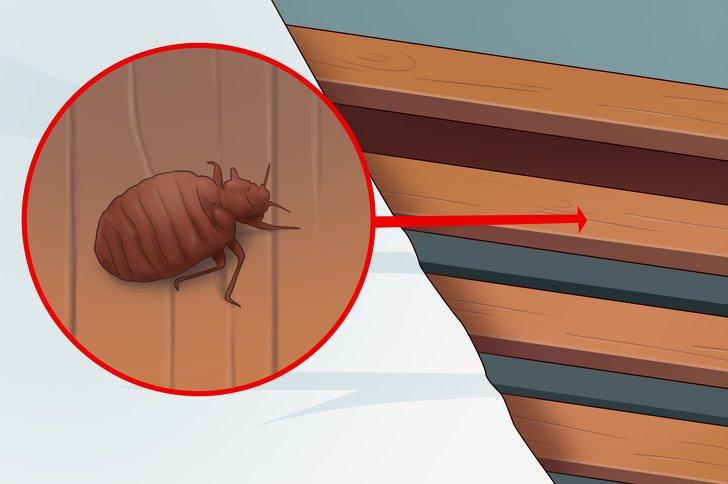 5 priznakov togo chto v vashem dome est postelnye klopy