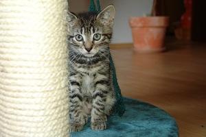 Как приучить котёнка к когтеточке? 4 эффективных приёма